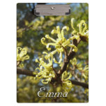 Witch Hazel Flowers Clipboard