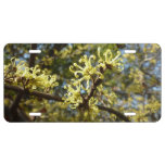 Witch Hazel Flowers License Plate