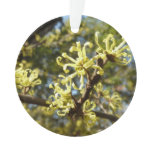 Witch Hazel Flowers Ornament
