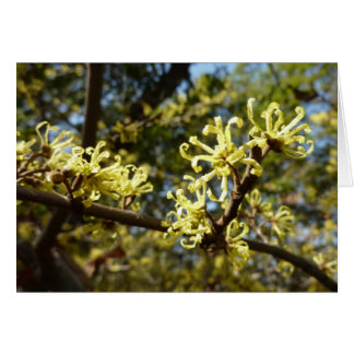 Witch Hazel Flowers Pale Yellow Floral Greeting Card