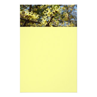 Witch Hazel Flowers Pale Yellow Floral Stationery