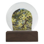 Witch Hazel Flowers Snow Globe