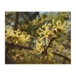 Witch Hazel Flowers Wood Wall Art