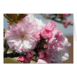 With Deepest Sympathy Spring Flowers Greeting Card