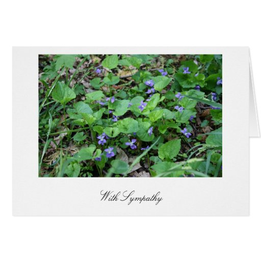 With Sympathy violets card