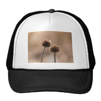 Withered globe thistle in autumn Macro Trucker Hat