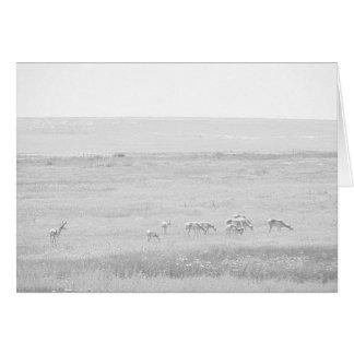 WKS Wildlife Series Card