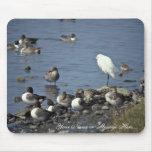 WO, patos rojizos y Egrets nevados Alfombrillas De Ratón