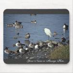WO, patos rojizos y Egrets nevados Tapetes De Ratones