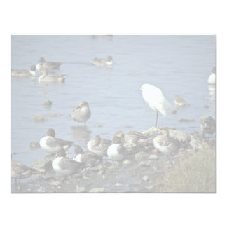WO, Pintails and Snowy Egrets Announcements