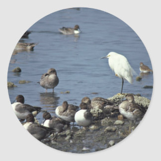 WO, Pintails and Snowy Egrets Sticker