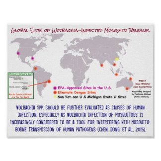 Wolbachia and Human Infection by RoseWrites Poster