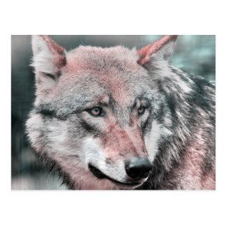 wolf 1115 postcard