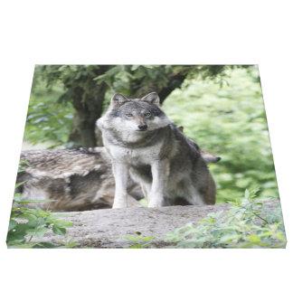 Wolf 14AJ Canvas Print