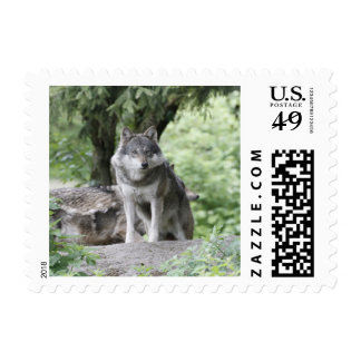 Wolf 14AJ Postage Stamps