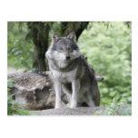 Wolf 14AJ Postcard