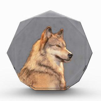 Wolf 2 award