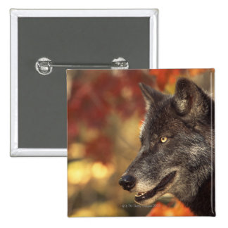 Wolf 2 pinback button