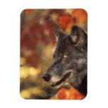Wolf 2 magnet