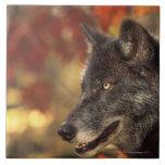 Wolf 2 tile