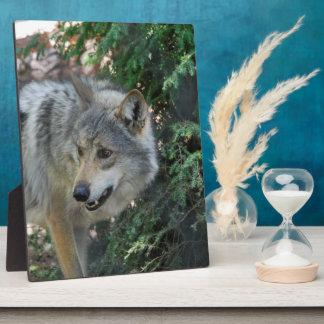 wolf-42 photo plaque