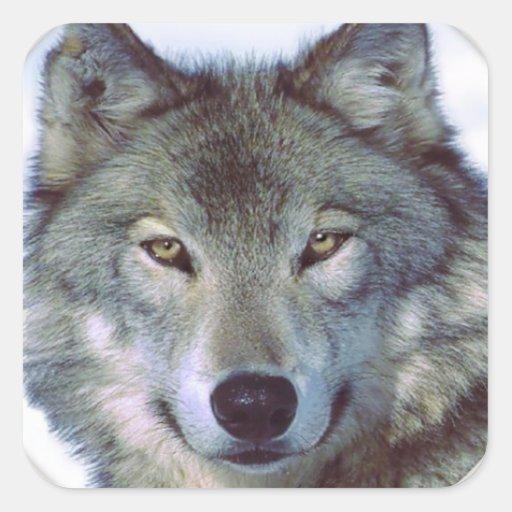 Wolf animal totem square sticker