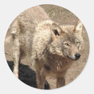 Wolf Animals Peace Love Nature Park Wolves Destiny Classic Round Sticker