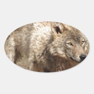 Wolf Animals Peace Love Nature Park Wolves Destiny Oval Sticker