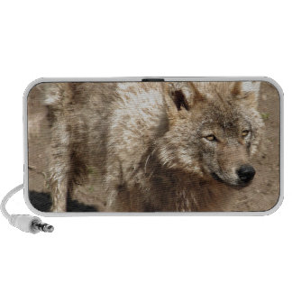 Wolf Animals Peace Love Nature Park Wolves Destiny Mp3 Speakers
