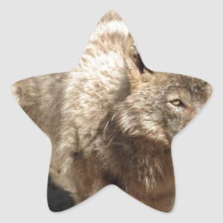 Wolf Animals Peace Love Nature Park Wolves Destiny Star Sticker