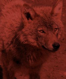Wolf Animals Peace Love Nature Park Wolves Destiny Tshirt