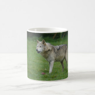 Wolf at Woburn Safari Park Coffee Mug