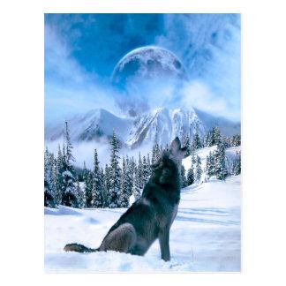 Wolf Call Postcard