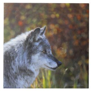 Wolf (Canis Lupus) Ceramic Tile