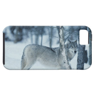 Wolf (Canis lupus) during Winter iPhone SE/5/5s Case