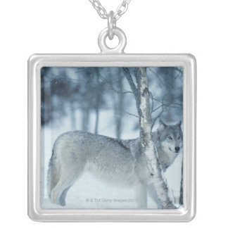 Wolf (Canis lupus) during Winter Silver Plated Necklace