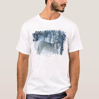 Wolf (Canis lupus) during Winter T-Shirt