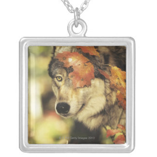 Wolf (Canis lupus), headshot, with Autumn color, Silver Plated Necklace