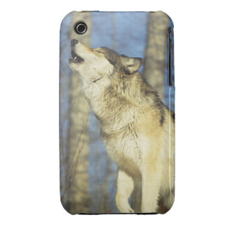 Wolf (Canis lupus) howling, close-up, Canada Case-Mate iPhone 3 Cases