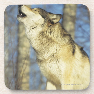 Wolf (Canis lupus) howling, close-up, Canada Coaster