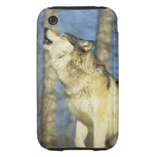 Wolf (Canis lupus) howling, close-up, Canada iPhone 3 Tough Covers