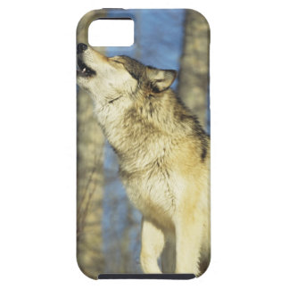 Wolf (Canis lupus) howling, close-up, Canada iPhone SE/5/5s Case
