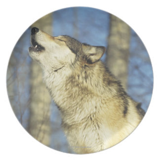 Wolf (Canis lupus) howling, close-up, Canada Plate