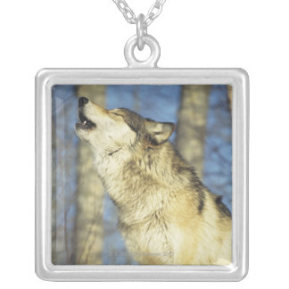Wolf (Canis lupus) howling, close-up, Canada Silver Plated Necklace