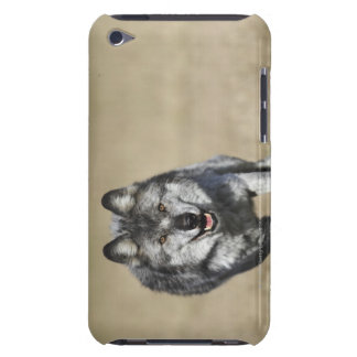 Wolf (Canis Lupus) Running Towards Camera Barely There iPod Case