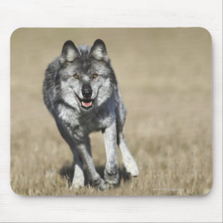 Wolf (Canis Lupus) Running Towards Camera Mouse Pad
