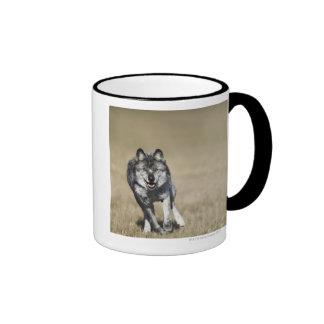 Wolf (Canis Lupus) Running Towards Camera Ringer Mug