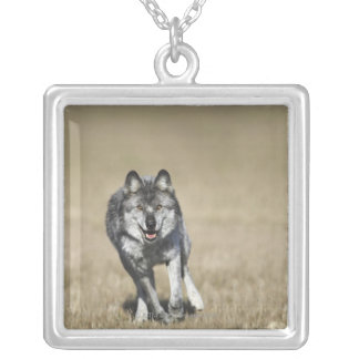 Wolf (Canis Lupus) Running Towards Camera Silver Plated Necklace