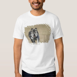 Wolf (Canis Lupus) Running Towards Camera T-shirt
