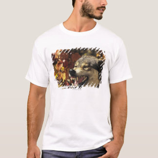 Wolf (Canis lupus) snarling, headshot, with T-Shirt